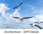 several seagulls flying in a