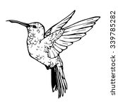 Vector Illustration Of Colibri...