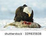 The Bald Eagle   Haliaeetus...