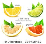 fresh citrus fruits. vector... | Shutterstock .eps vector #339915482