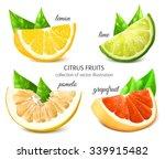 fresh citrus fruits. vector... | Shutterstock .eps vector #339915482