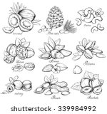 set of nuts. hand drawn... | Shutterstock .eps vector #339984992