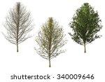 ginko tree | Shutterstock . vector #340009646