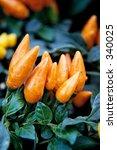 chiles | Shutterstock . vector #340025