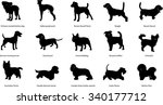 Stock vector breeds of dogs illustrations silhouettes different breeds of dogs chinese crested hairless dog 340177712