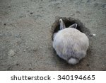 Rabbit Digging A Hole