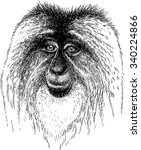 portrait of the macaque | Shutterstock .eps vector #340224866