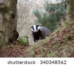 badger | Shutterstock . vector #340348562