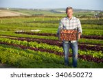 farmer with organic tomato crop ...