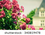 Stock photo bush of beautiful roses in a garden filtered shot 340819478