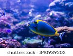Colorful Fish In Aquarium...