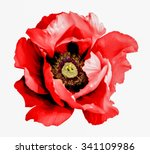 Surreal Dark Chrome Red Poppy...