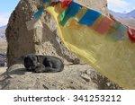 Black Dog Under Prayer Flags O...