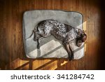 Stock photo  a tired dog sleeping on a big pillow 341284742