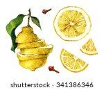 citrus fruit. watercolor... | Shutterstock . vector #341386346