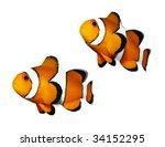 Tropical Reef Fish   Clownfish...