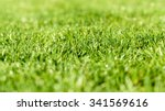 Fresh Green Grass Texture...
