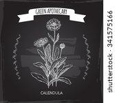 calendula officinalis aka pot...   Shutterstock .eps vector #341575166