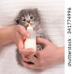 Stock photo woman feeding newborn kitten with bottle of milk over white sweater background 341774996