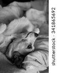 Portrait Of A Cute Dog Lying I...
