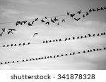 a flock of birds takes off from ... | Shutterstock . vector #341878328