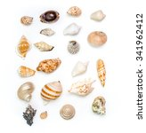 seashell collection on white... | Shutterstock . vector #341962412