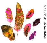 isolated feathers. a set of... | Shutterstock . vector #342011972