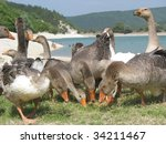 Gray Goose Are Looking For The...