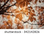 Autumn Oak Tree Leaves...
