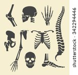 human skeleton. vector black... | Shutterstock .eps vector #342294446