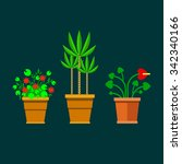flowers in pots flat style. set ... | Shutterstock .eps vector #342340166