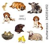 Illustration Of Baby Animals ...