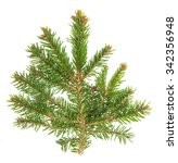 spruce sprig isolated on white... | Shutterstock . vector #342356948