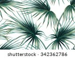 tropical palm leaves seamless... | Shutterstock .eps vector #342362786