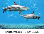 Blacktip Reef Sharks Swimming...