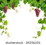 Fresh grapevine border, isolated on white background - stock photo