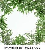 ever green fir tree decoration... | Shutterstock . vector #342657788