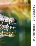 Small photo of Cropped image of dangerous American crocodile (Crocodylus acutus) with mouth open in water