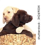 Stock photo puppies in a basket 34269034
