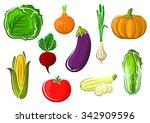 ripe fresh tomato  cabbage ...   Shutterstock .eps vector #342909596