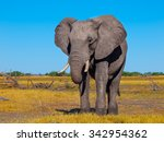 Lonesome Big African Elephant...
