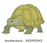 Stock vector detailed vector illustration of a generic tortoise land turtle in subtle greens 342995045