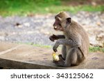 balinese monkey | Shutterstock . vector #343125062