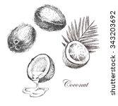 vector coconut hand drawn... | Shutterstock .eps vector #343203692