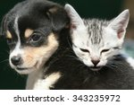 Stock photo cute kitten and puppy 343235972