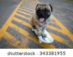 Stock photo the pug dog playing skateboard on the road 343381955