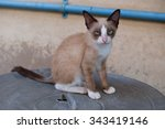 alone brown cat sit on the floor | Shutterstock . vector #343419146