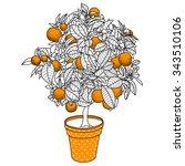 citrus tangerine  orange or... | Shutterstock .eps vector #343510106