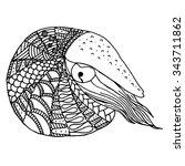 hand drawn nautilus in... | Shutterstock .eps vector #343711862