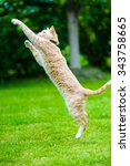 Stock photo funny red cat jumping on green grass 343758665
